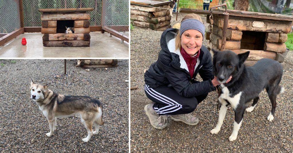 Sled Dog Kennels in Denali National Park, Alaska Road Trip Stop