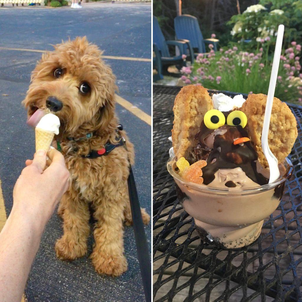 Puppy Cone at Not Licked Yet Frozen Custard