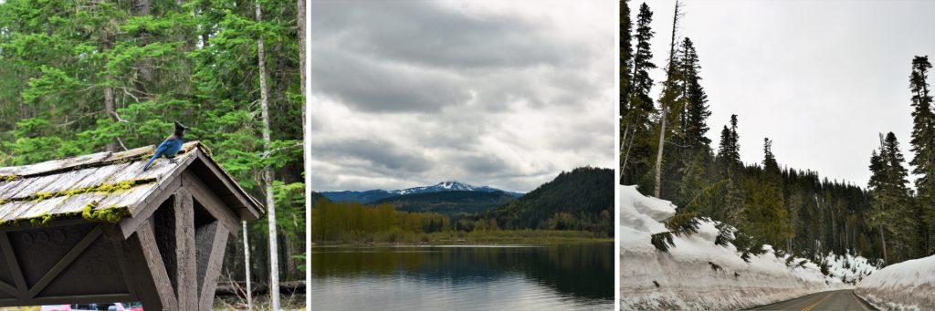 Mount Rainer National Park