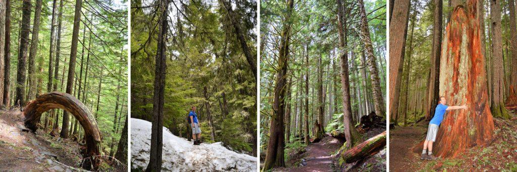 Rampart Trail, Mount Rainer National Park