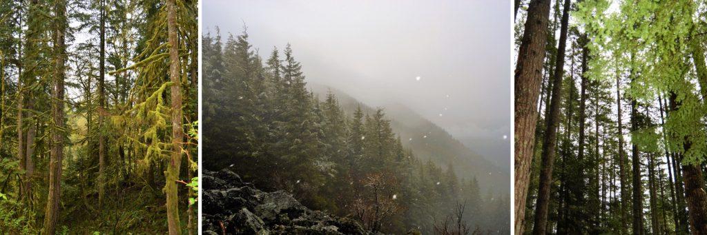 Mount Si Hiking Views