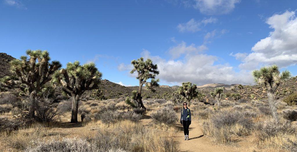 Lost Horse Mine Trail, Joshua Tree National Park