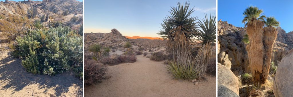 Lost Palm Oasis Trail, Joshua Tree National Park