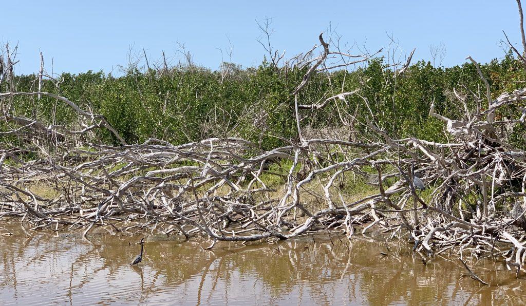 Eco Pond Trail, Everglades National Park