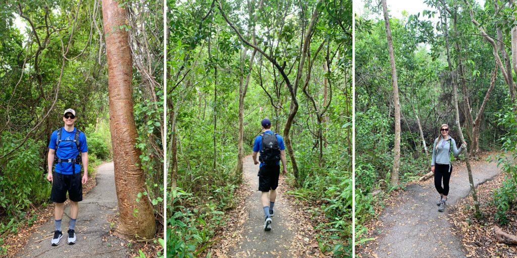 Gumbo Limbo Trail, Everglades National Park