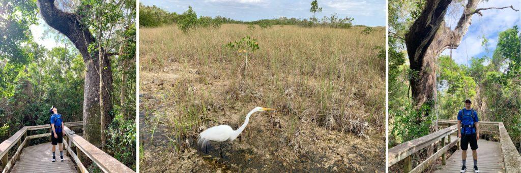 Mahogany Hammock Trail, Everglades National Park