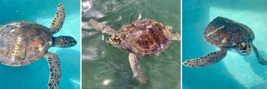 Turtle Hospital, Marathon, FL
